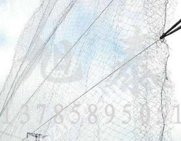 防鸟网生产厂家