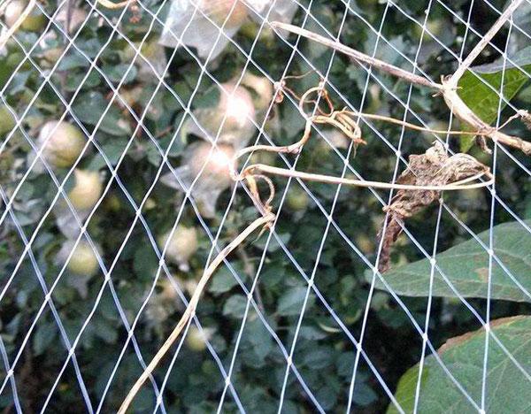 葡萄专用防鸟网
