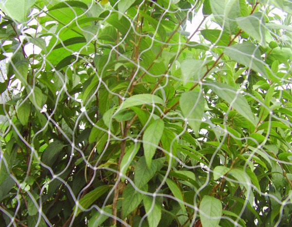 果园专用防鸟网
