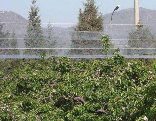 尼龙防鸟网