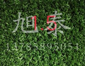 成都草坪网