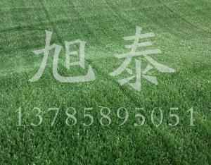 草坪网哪家棒
