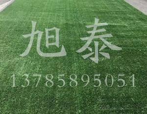 草坪网多少钱