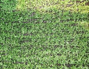 安徽草坪网