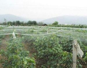 果园尼龙防鸟网