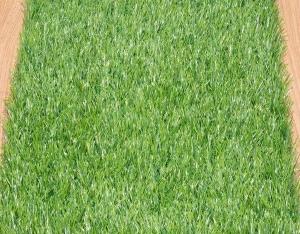 绿色人工草坪